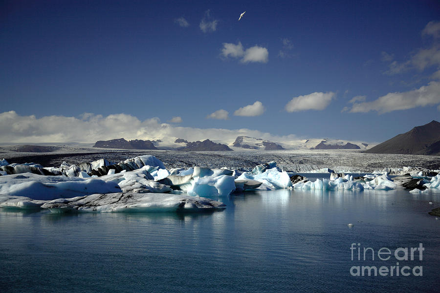 Afloat Photograph - Hundreds of icebergs by Deborah Benbrook