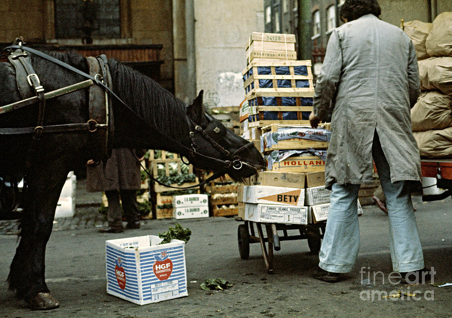 Market Photograph - Hungry Horse by David Davies