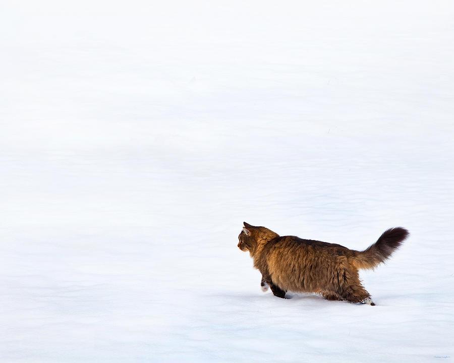 Domestic Cats Photograph - Hunter At Work by Theresa Tahara