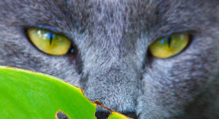 Cat Photograph - Hunter by Debbie Cundy