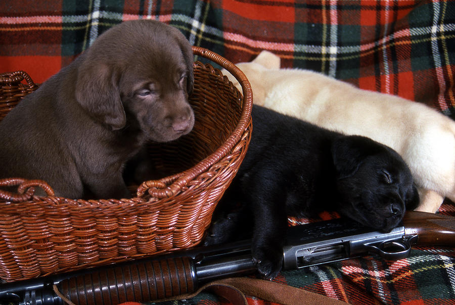 Dog Photograph - Hunters Puppy Dreams by Skip Willits