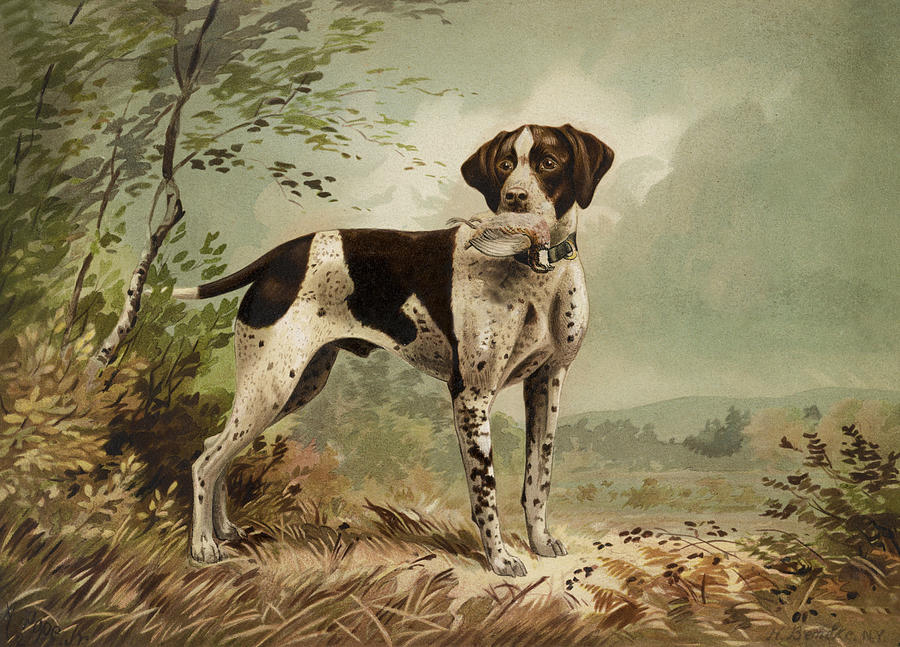 Dog Painting - Hunting Dog Circa 1879 by Aged Pixel