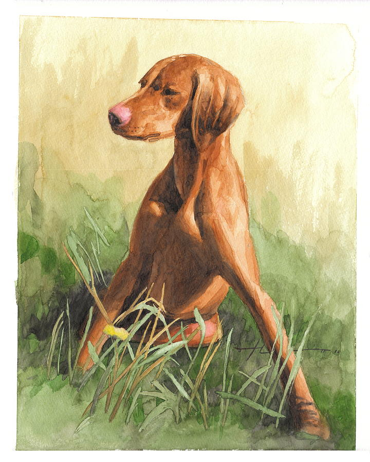 Hunting Dog Puppy Watercolor Portrait Drawing by Mike Theuer