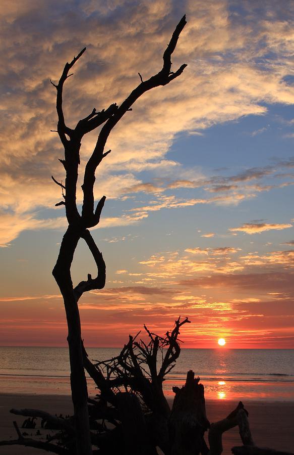 Hunting Island South Carolina Coast Photograph