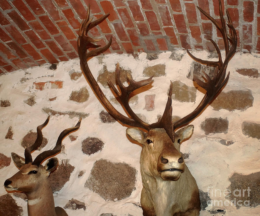 Europe Photograph - Hunting Trophys by Rudi Prott