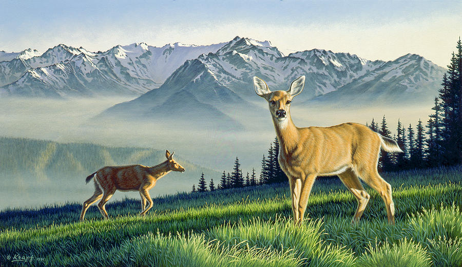 Wildlife Painting - Hurricane Ridge-blacktails by Paul Krapf