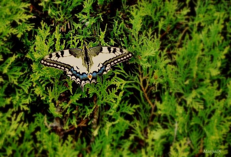 Nature Photograph - Hurt by Marija Djedovic