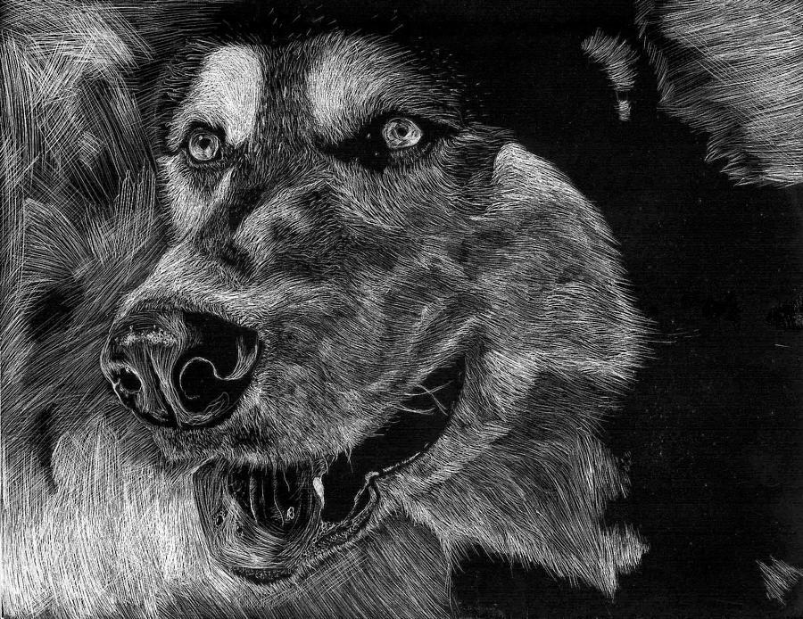 Husky Drawing - Husky by Lauren Alexandra