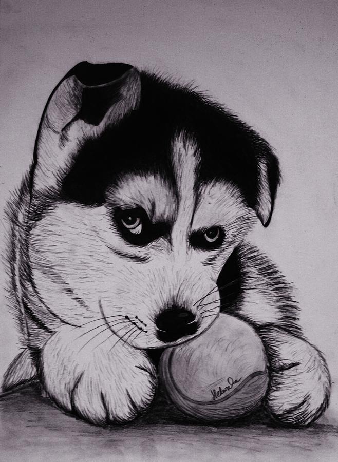 Рисунки хаски карандашом