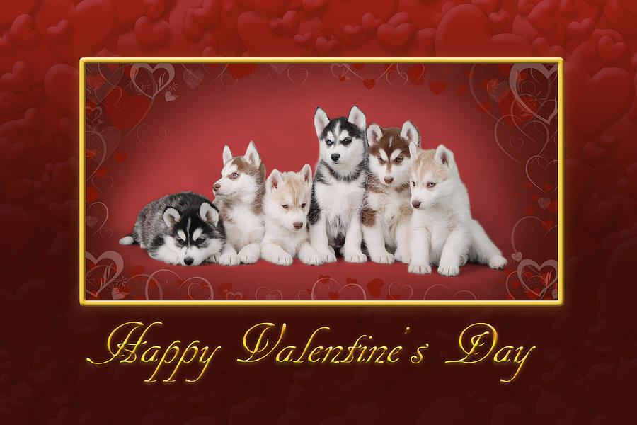 Animal Photograph - Huskys Valentine by Waldek Dabrowski