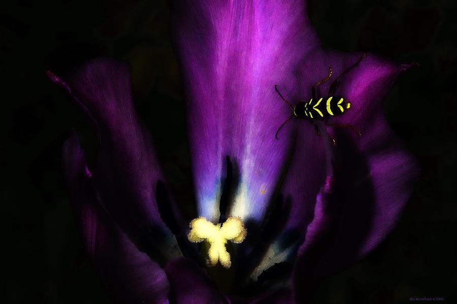 Beetle Photograph - Hvepsebille by Ole Klintebaek