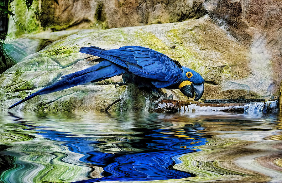 Image result for hyacinth macaw photography