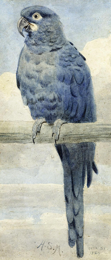 Hyacinth Macaw Painting - Hyacinthine Macaw by Henry Stacey Marks