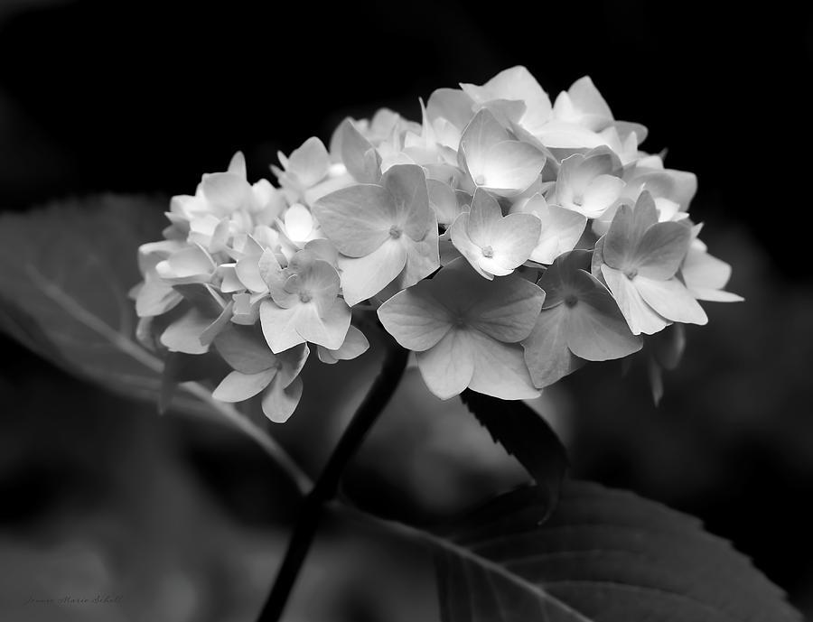 Hydrangea Flower Bouquet Black And White Photograph By Jennie