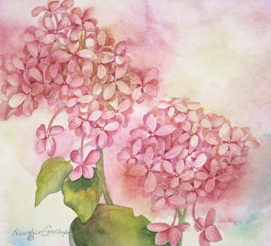 Hydrangea Painting - Hydrangea by Heather Gallup