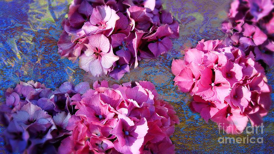 Hydrangea Photograph - Hydrangea Mix by Beverly Guilliams