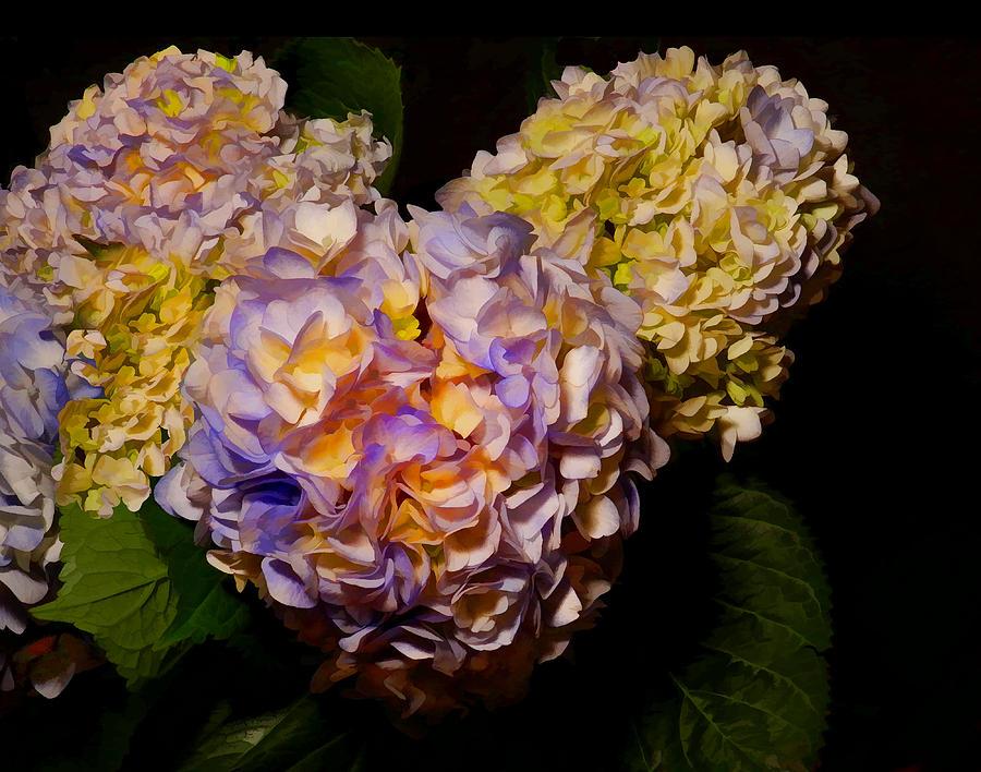 Flowers Photograph - Hydrangea Study by Grace Dillon