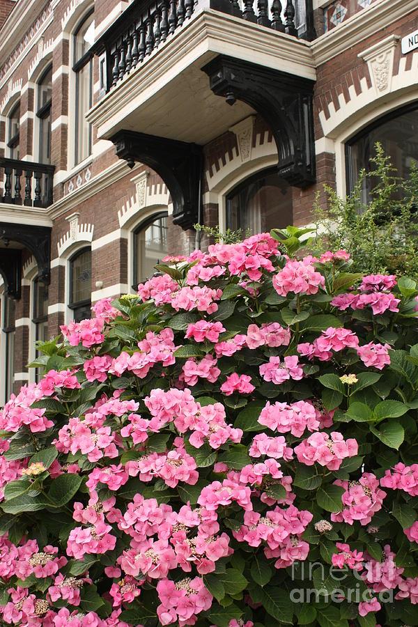 Hydrangeas Photograph - Hydrangeas In Holland by Carol Groenen