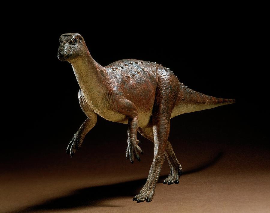 Bipedal Photograph - Hypsilophodon Dinosaur Model by Natural History Museum, London/science Photo Library