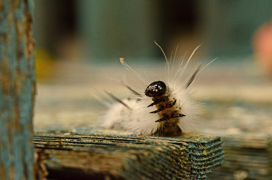Caterpillar Photograph - I Am A Caterpillar by Lori Tambakis