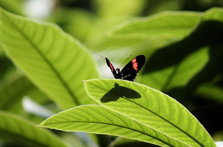 Butterfly Photograph - I Am Big by Jennifer Sturch