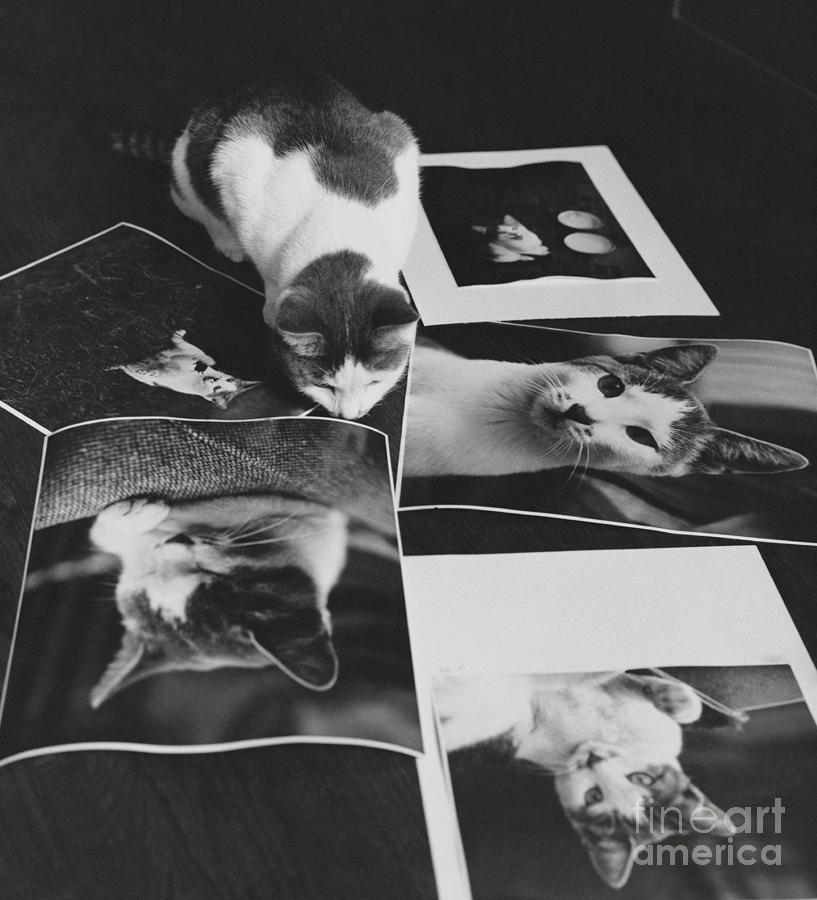 Cat Photograph - I Am So Photogenic by Suzanne Szasz