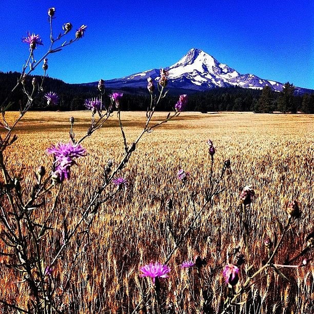 Beautiful Photograph - I Apologize For All The Mt Hood Shots by Mike Warner