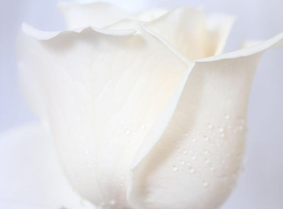 Roses Photograph - I Believe In Heaven by The Art Of Marilyn Ridoutt-Greene