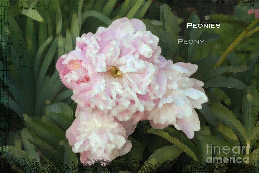 Peony Photograph - I Cry For You My Peonies by Rosemary Aubut