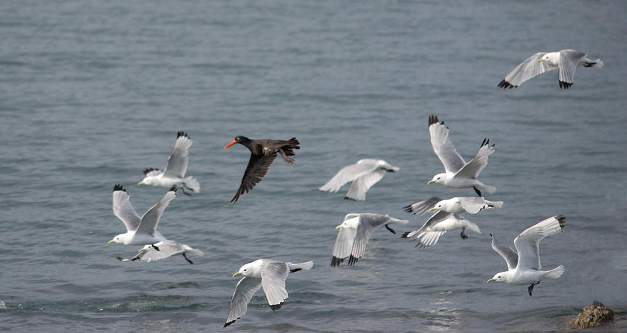 Gulls Photograph - I Dont Think Theyll Notice Me by Jim Cook