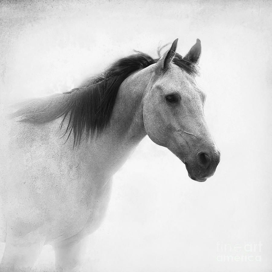 I Dream Of Horses Photograph by Betty LaRue