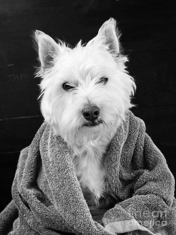 Animal Photograph - I Hate Mondays by Edward Fielding