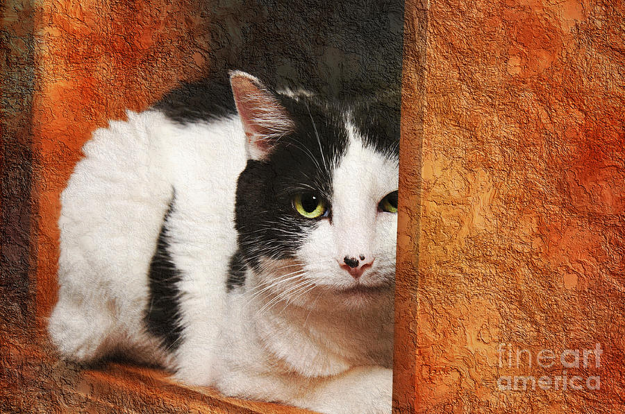 Cat Photograph - I Have My Eye On You by Andee Design