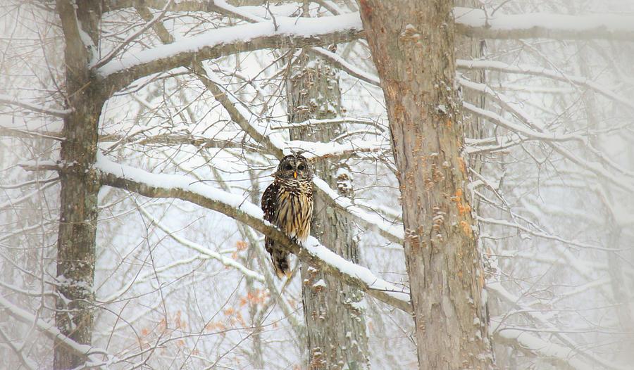 Winter Scene Digital Art - I Have My Eyes On You by Sharon Batdorf