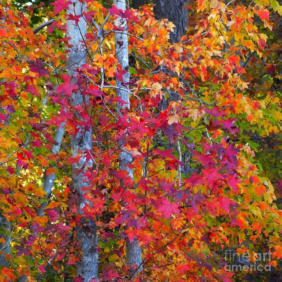 Autumn Leaves Photograph - I Love Fall by Scott Cameron
