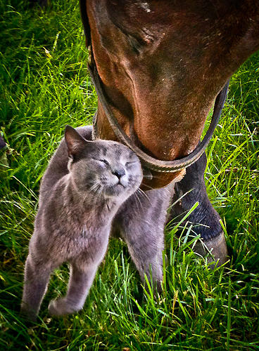 Cat Photograph - I Love You by Sherri Cavalier