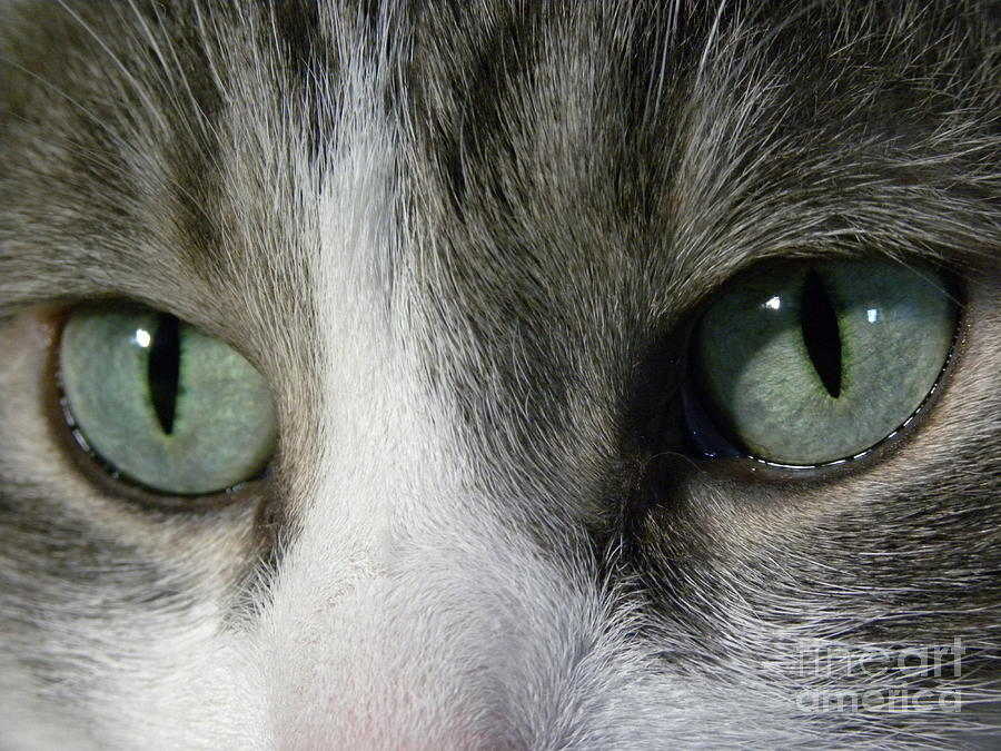 Cat Eyes Photograph - I Only Have Eyes For You by Laura Yamada