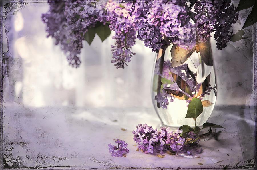 Lilacs Photograph - I Picked A Bouquet Of Lilacs Today by Theresa Tahara