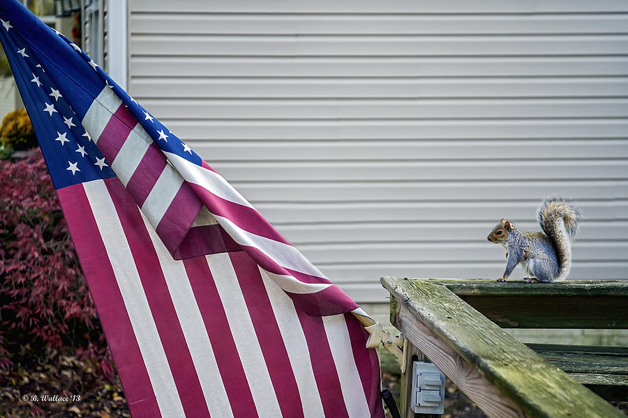 2d Photograph - I Pledge Allegiance by Brian Wallace