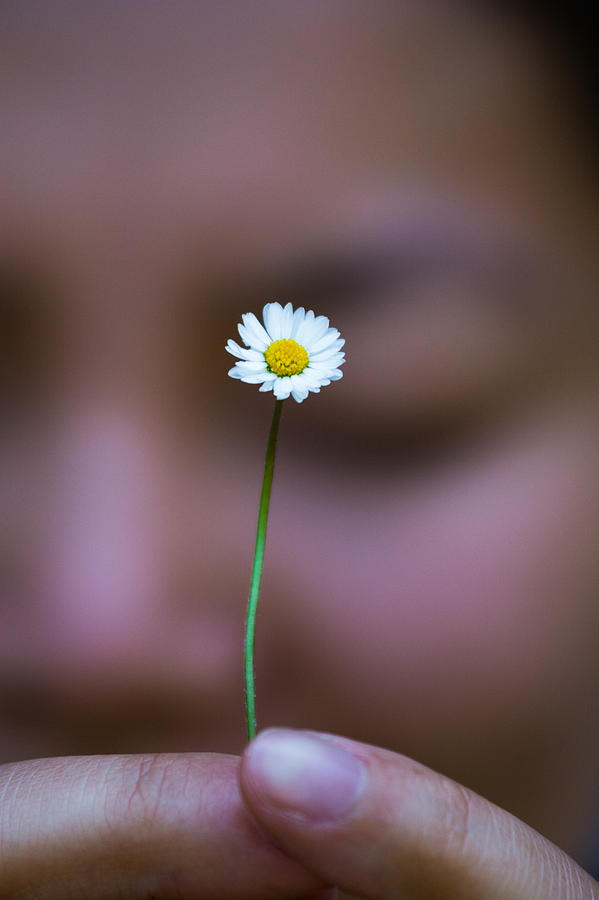 Daisy Photograph - I Praise Thee Daisy by Mike Lee