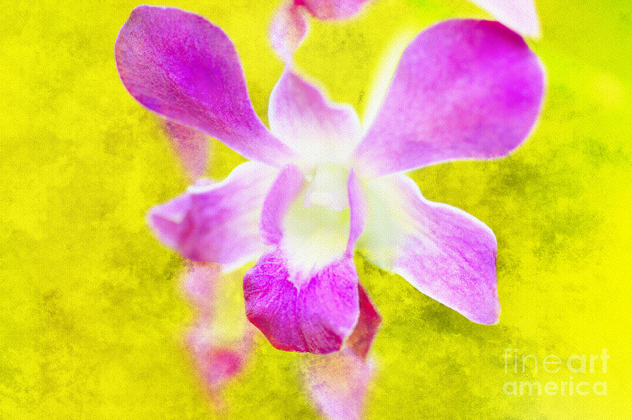 Orchid Photograph - I Remember You by Floyd Menezes