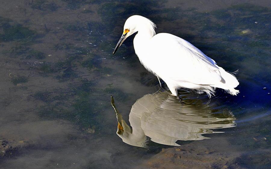Birds Photograph - I See Me by AJ  Schibig