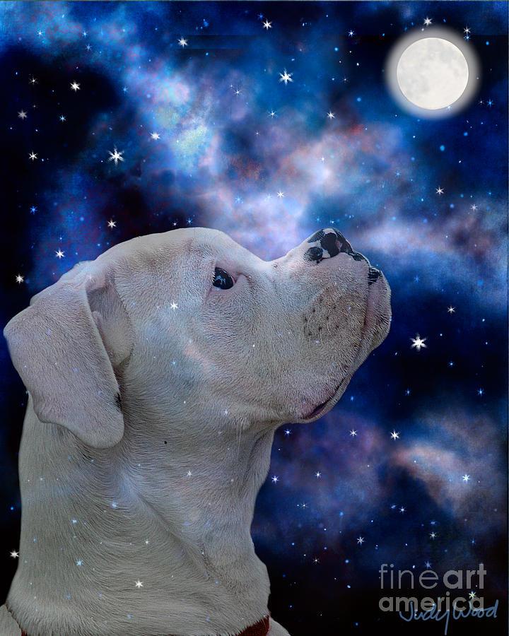Dog Digital Art - I See The Moon by Judy Wood