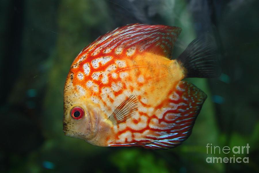 Fish Photograph - I See You by Bob McGill