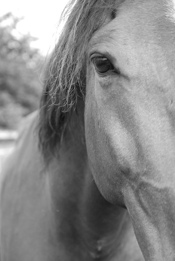 Thoroughbred Photograph - I See You by Jennifer Ancker