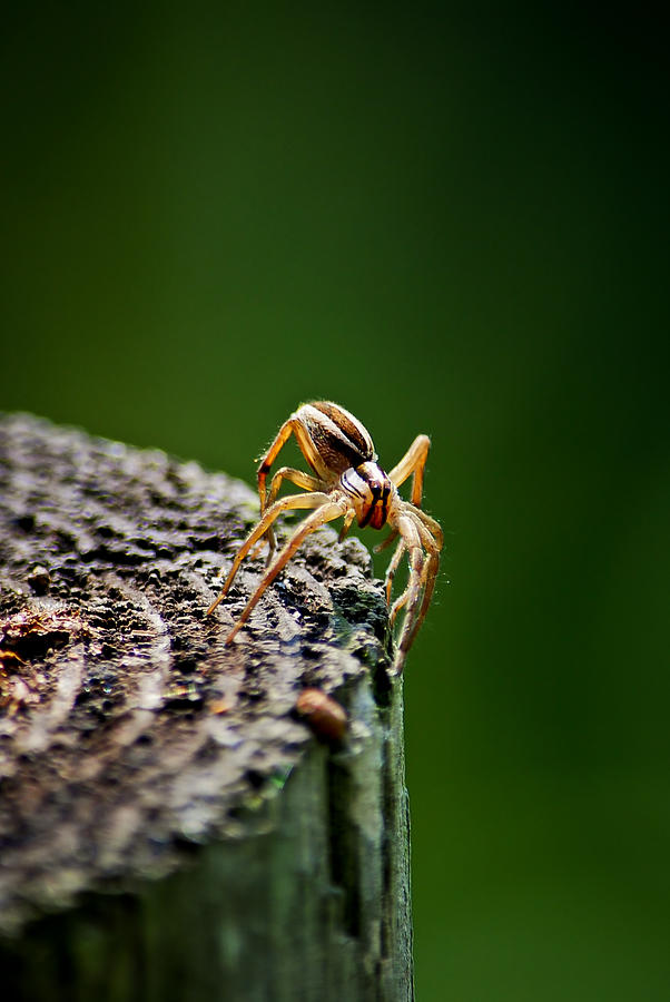Spider Photograph - I See You by Swift Family