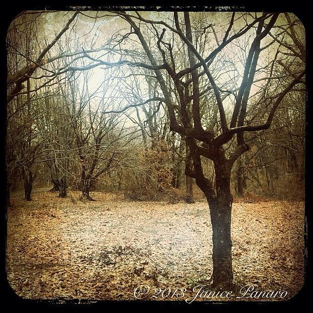 Autumn Photograph - I Took A Walk On The Park Today by Jan Pan