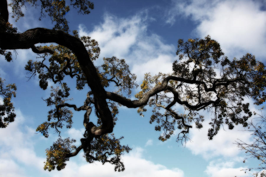 Trees Photograph - I Touch The Sky by Laurie Search