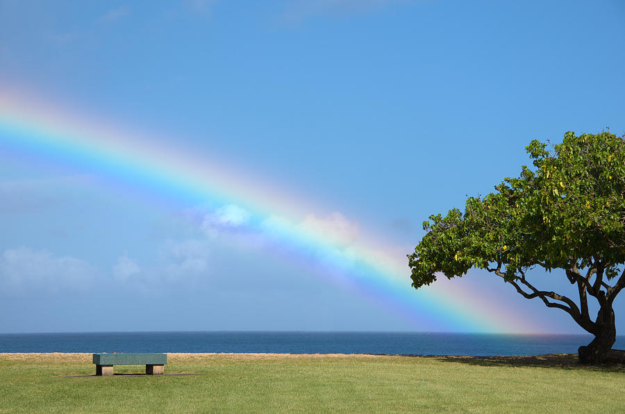 I Want To Be There Tree At The End Of A Rainbow Waimea Valley Beach Park Oahu Hawaii Photograph - I Want To Be There by Brian Harig