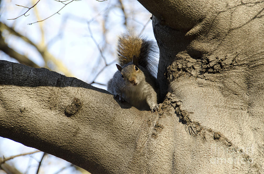 Squirrel Photograph - I Was Waiting For You by Bianca Ferrando
